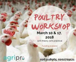 Why You Should Consider Poultry Production As A Viable Business To Invest In