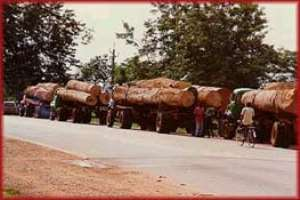 Virtual collapse  of timber industry