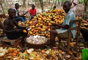 Selling The Best Cocoa For Less: History Predicts Doom For Silent Suffering Farmers