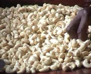 Ghana Raked In $981million From Cashew Exports