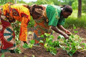 1.2 Million Smallholder Farmers In Ghana And Burkina Faso To Benefit From A New Cooperation Between BMZ And AGRA