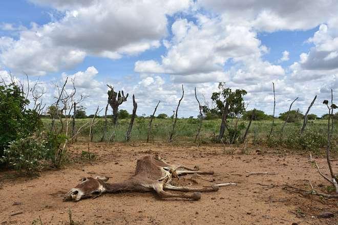 Brazil Corpse, Credit - The Donkey Sanctuary