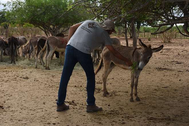 Brazil Farm. Credit - The Donkey Sanctuarty