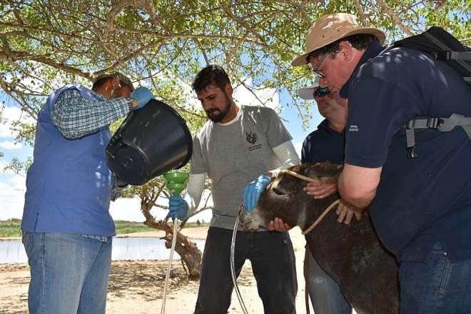 Brazil Veterinary Care. Credit - The Donkey Sanctuary