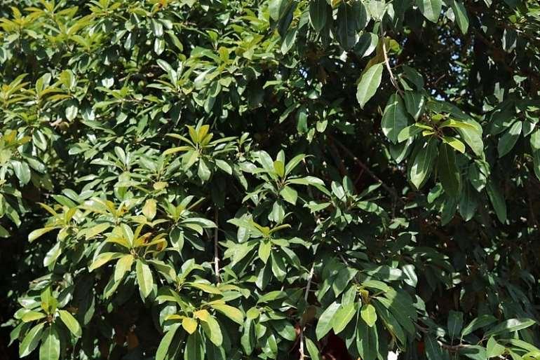 521202090603-typbsferqm-tree