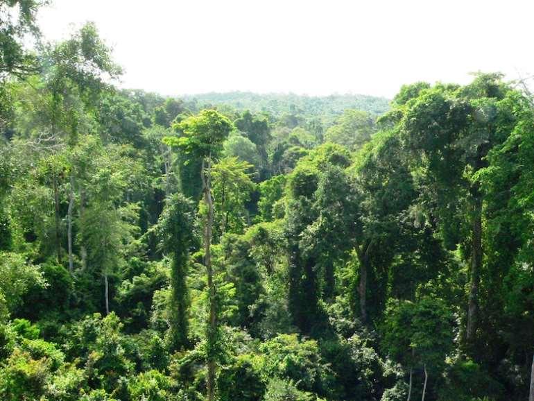523201863614 ghanarainforestkakumnationalpark