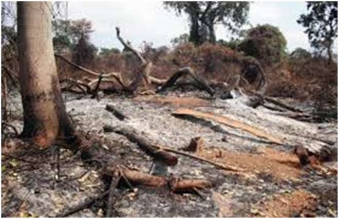 destruction environment essay When you write an essay on environment writing a great essay on environment: themes, tips and help the causes and consequences of rainforest destruction.