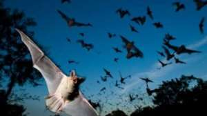 Tanzania's Tourist Town Under Threat Following Bats Invasion