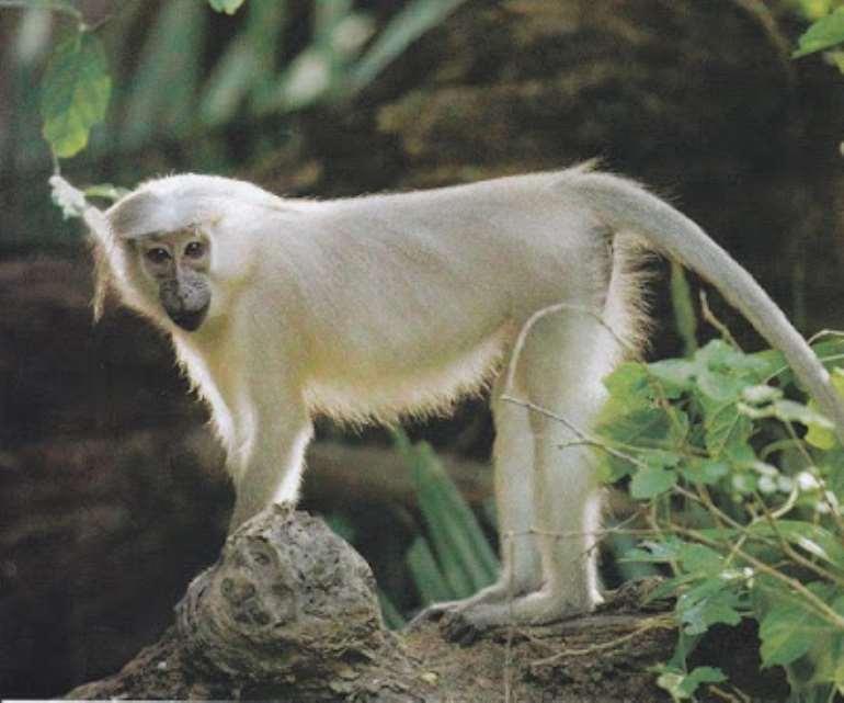 720201853616 monkey2bspecies2bghana