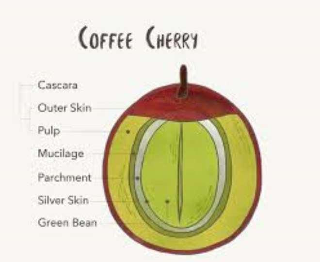 Coffee Cherry Analysis