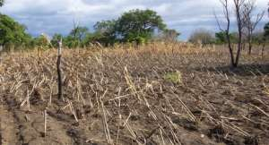 Space-age technology for fight against crop-devastating pest outbreaks in Ghana