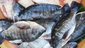 Ban On Tilapia Import To Boost Local Production