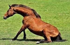 A sick horse