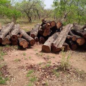 Felling Of Rosewood Increases