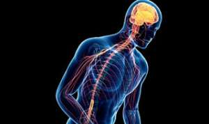 Parkinson's disease affects the nerve cells in the brain that produce dopamine