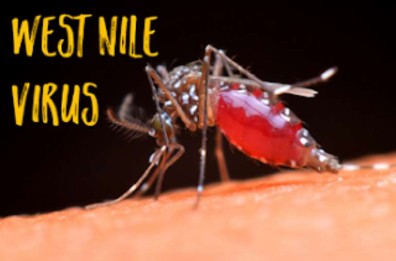 Health Officials: 3 People Test Positive For West Nile Confirmed In NJ
