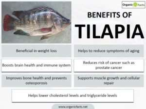 8 Amazing Benefits of Tilapia