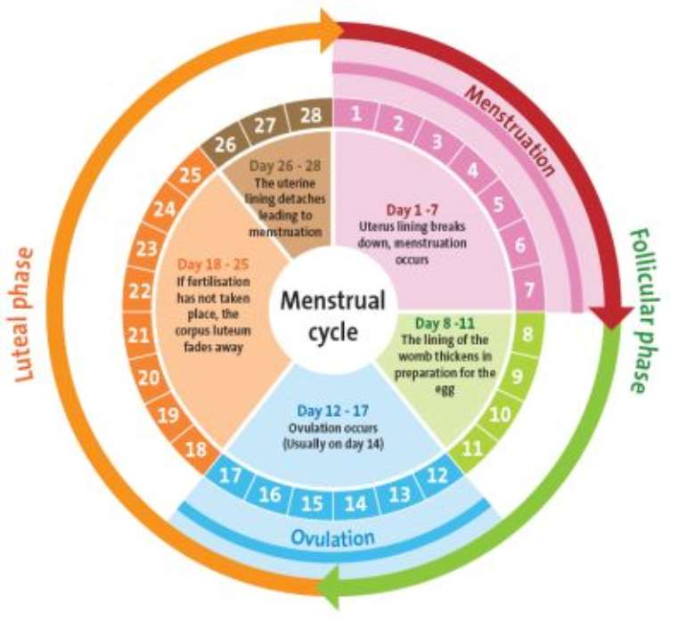 menstrualcyclesf7