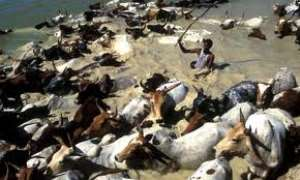KILL THEM! MP Orders Actions On Fulani's Cattle