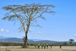 Taking the hi-tech fight to poachers will help to facilitate the work of game rangers such as those on this foot patrol, who be able to respond to security breaches flashed up by the system.  By TONY KARUMBA (AFP)