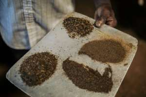 Tea time: Different grades of tea produced by the JTN plantation. By ALEXIS HUGUET (AFP/File)