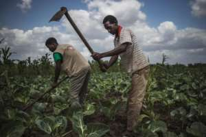 Technicians from the Catholic NGO Caritas helped farmers tend crops in a new start after the cyclone.  By MARCO LONGARI (AFP/File)