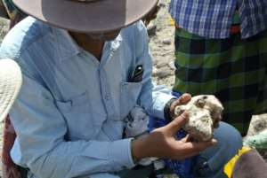 The 3.8-million-year-old skull of the early human was unearthed in Ethiopia.  By HO (CLEVELAND MUSEUM OF NATURAL HISTORY/AFP)