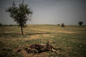 The carcass of a cow lies on the trail leading to Bermo.  By Marco LONGARI (AFP)