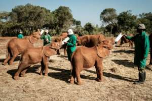 The baby elephants keenly await feeding time -- a special nutrient-rich mix administered by keepers. By Yasuyoshi CHIBA (AFP)
