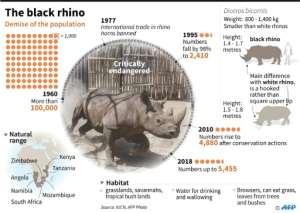 The black rhino.  By Kun TIAN (AFP)