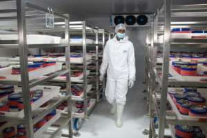The eggs are kept in a refrigerated room at 0 degrees Celsius.  By MAMYRAEL (AFP)