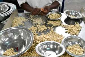 The kernel of the cashew is widely used in cooking and in cosmetics, while the resin from its shell is suitable for a surprising range of industrial uses.  By ISSOUF SANOGO (AFP/File)