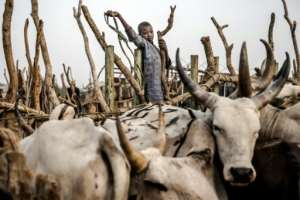 The herders in Nigeria are ethnic Fulani Muslims. By Luis TATO (AFP)
