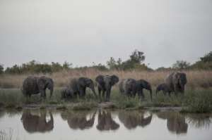 The Pendjari wildlife reserve is known for its elephants and lions. By STEFAN HEUNIS (AFP/File)