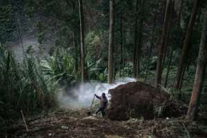 The WWF is among groups trying to minimise the impact of charcoal burning by introducing more efficient ovens.  By ALEXIS HUGUET (AFP)