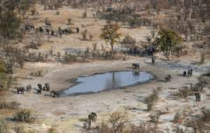 The vast Chobe National Park has more than 100,000 elephants.  By MONIRUL BHUIYAN (AFP)