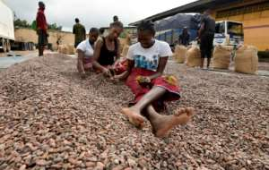Time to trade: Women in Abidjan sort cocoa beans for export.  By Sia KAMBOU (AFP)