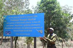 Wangari Maathai, the late founder of Kenya's Green Belt Movement, and the first African woman to win the Nobel Peace Prize, rallied church leaders, lawyers and students to Karura's defence.  By SIMON MAINA (AFP)