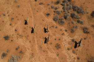 Waterbucks run through the Thuru Lodge game reserve. Thousands of animals have been killed by the drought.  By Guillem Sartorio (AFP)