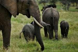 Wildlife has flourished again.  By Tony Karumba (AFP)