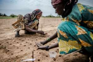 Women plant tree seeds in Niger's southern region of Zinder under a scheme to roll back the desert.  By Luis TATO (FAO/AFP/File)
