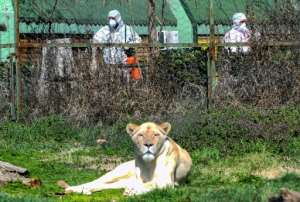 Workers disinfect the area surrounding the lion enclosure at Skopje Zoo.  By Robert ATANASOVSKI (AFP)