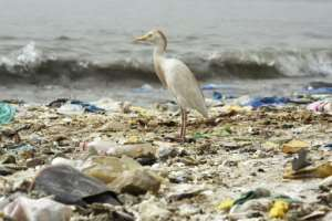 A bird stands on a beach covered with trash in Hann Bay in Dakar, Senegal.  By SEYLLOU (AFP/File)
