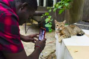 A cat looks unfazed by media attention at the Bushman Cafe venue for Ivory Coast's second smartphone movie festival. By ISSOUF SANOGO (AFP)