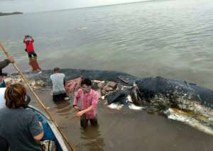 A dead sperm whale that washed ashore had nearly six kilograms (13.2 lbs) of plastic waste in its stomach, in Wakatobi National Park in Indonesia in 2018.  By La Ode M. Saleh Hanan (AFP/File)