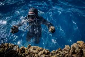 A diver gathers mussels in a farm off the coast of the port city of Nador in Morocco.  By FADEL SENNA (AFP)