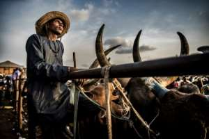 A Fulani herdsman waits for customers at Lagos's main cattle market.  By Luis TATO (AFP)