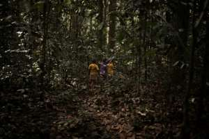 A group of young Bayaka Pygmies go deep into the forest to stay at a hunting camp.  By FLORENT VERGNES (AFP/File)