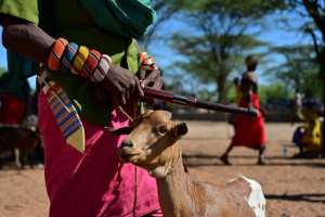 A long dry spell can set a pastoral family back years and erode their capacity to handle future shocks, the UN's Food and Agriculture Organization said in a 2018 report.  By TONY KARUMBA (AFP)
