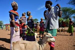 A traditional Samburu man haggles for a goat with a woman from the same community at Merille livestock market.  By TONY KARUMBA (AFP)